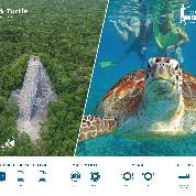Coba y nado con tortugas